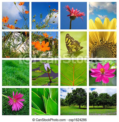 collage, Printemps,  nature - csp1624286