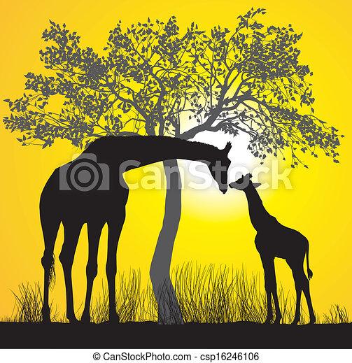 Giraffes and sunset - csp16246106