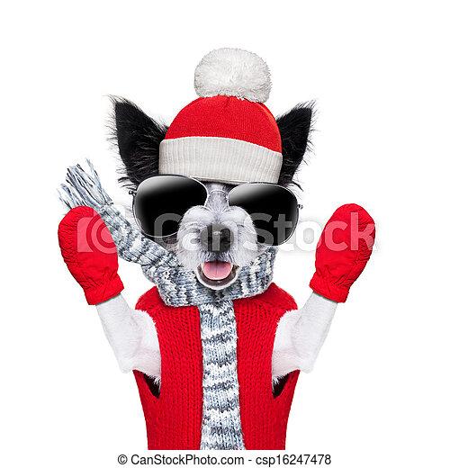 winter dog  - csp16247478