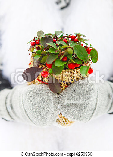 植物, 女, 冬, 彼女, 手を持つ - csp16250350