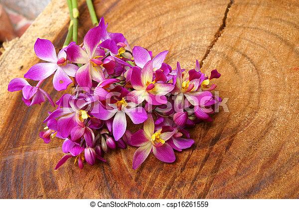 images de pourpre spathoglottis bois orchid e pourpre csp16261559 recherchez des. Black Bedroom Furniture Sets. Home Design Ideas