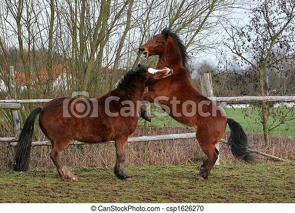 Pferd - csp1626270
