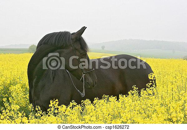 pferd - csp1626272