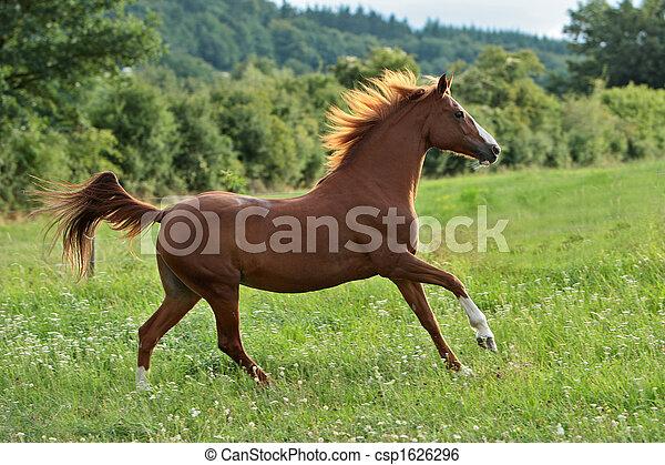pferd - csp1626296