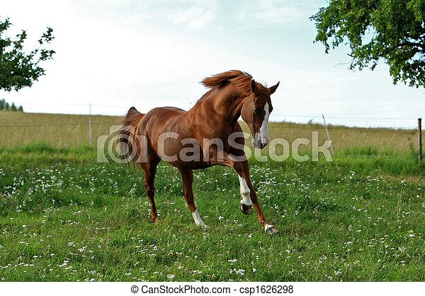 Pferd - csp1626298