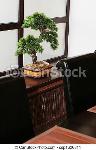bonsai on a window sill - csp1626311