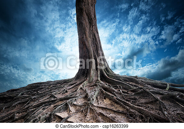 Scenic background of old tree and roots at night. Moon light magic and mystery landscape - csp16263399