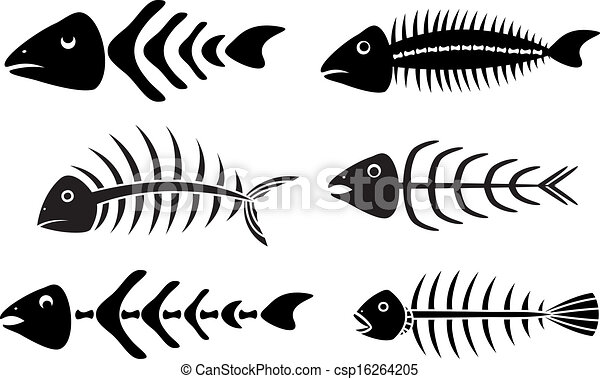 Fish Bones Drawing Vector Various Fish Bones