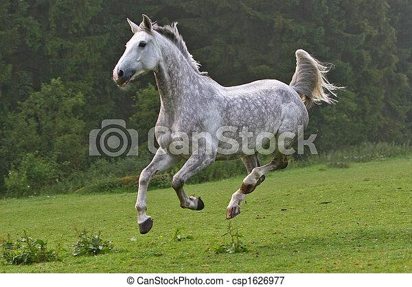 pferd, glücklich - csp1626977