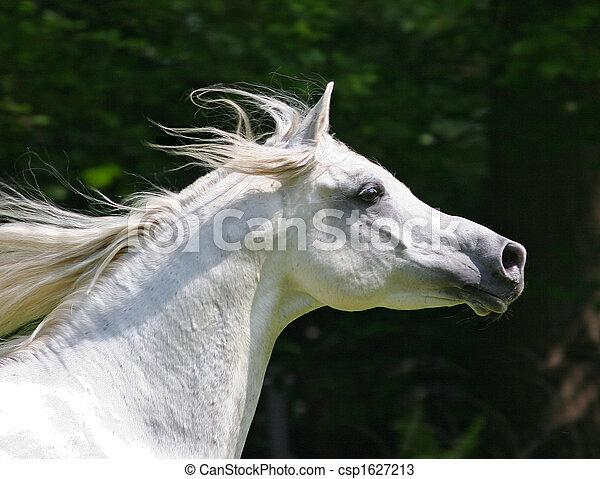 Stallion - csp1627213