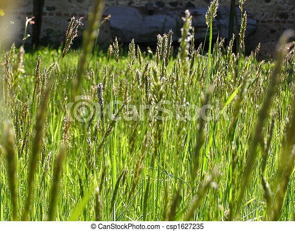 stock bilder von gras wiese unkraut greem gras wiese unkraut csp1627235 suchen sie. Black Bedroom Furniture Sets. Home Design Ideas