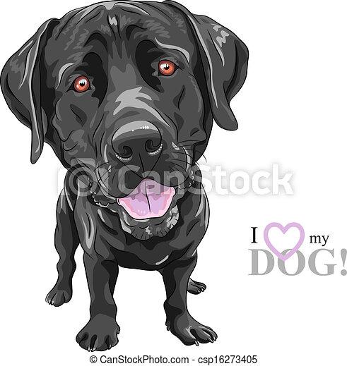 Black Dog Book Series