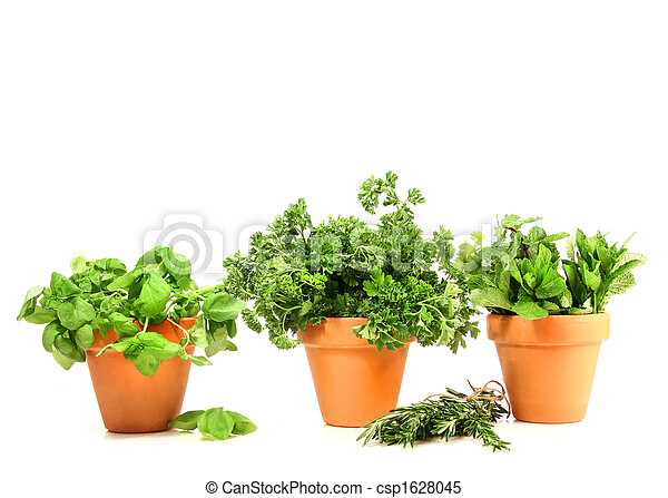 Clay pots with herbs on white - csp1628045