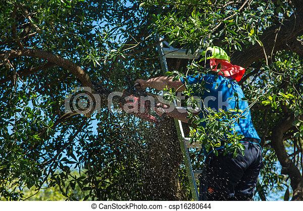 Tree Cutting - csp16280644