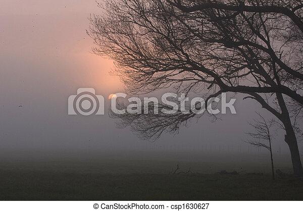 Sunrise, Sparks Lane, Cades Cove - csp1630627