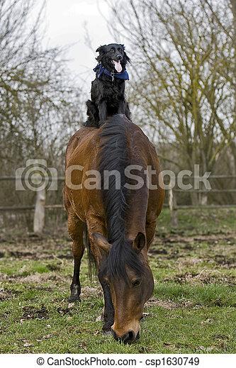 Pferd,  wiht, hund - csp1630749