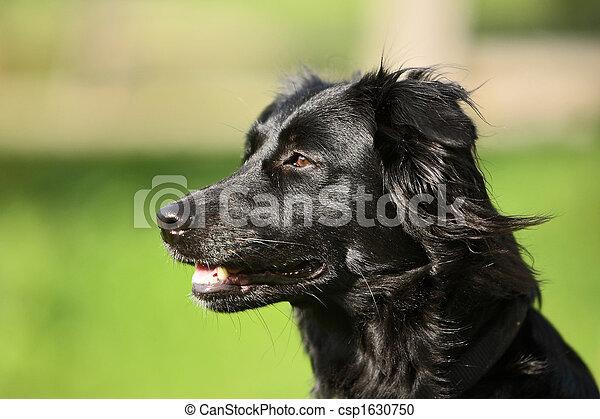 hund - csp1630750