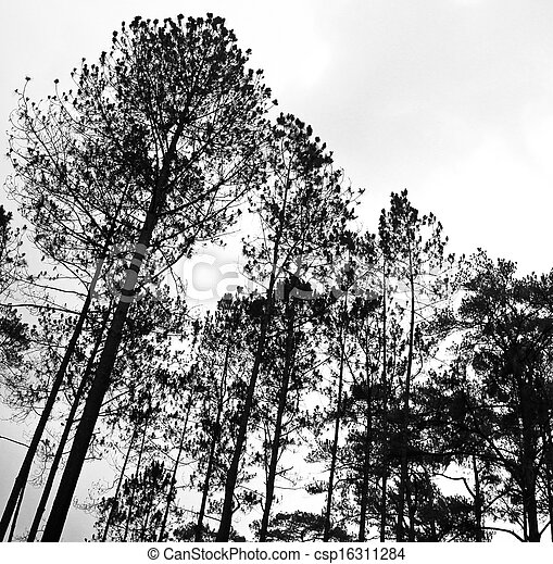 Pictures of Abstract black and white image of tree tops in the ...