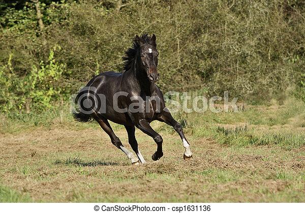 Pferd - csp1631136