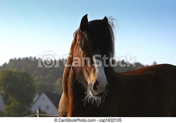 pferd, shirer - csp1632105