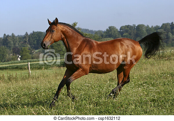 pferd - csp1632112