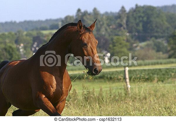 Pferd - csp1632113