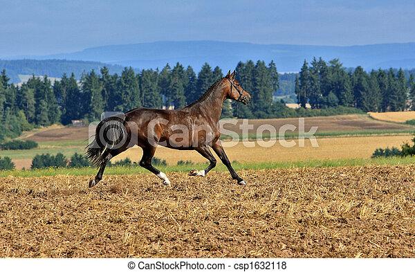 Pferd, rennender - csp1632118