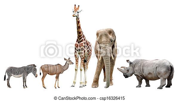 tiere, afrikanisch - csp16326415
