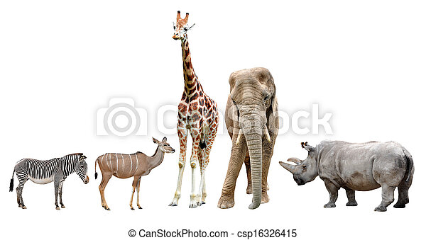 African animals - csp16326415