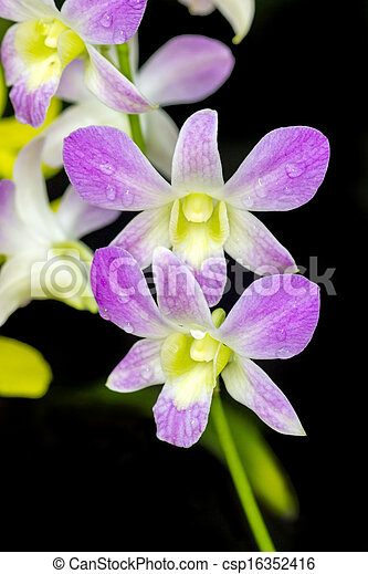 stock foto orchidee lila farbe tha arten stock bilder bilder lizenzfreies foto stock. Black Bedroom Furniture Sets. Home Design Ideas