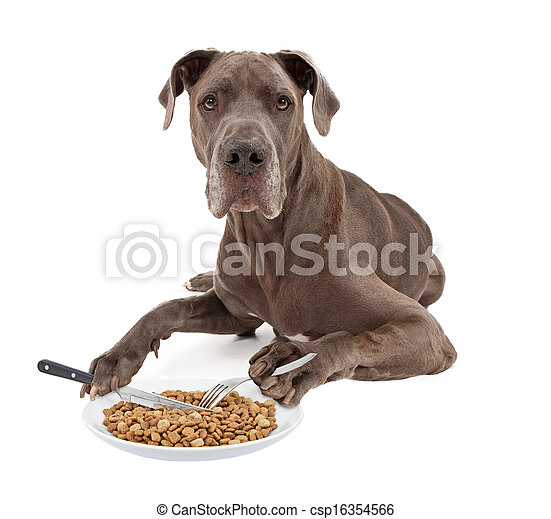 Great Dane Dog Eating Food with Utensils - csp16354566