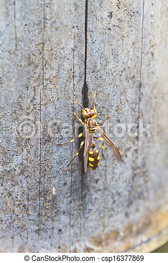 Hymenoptera, insecto - csp16377869