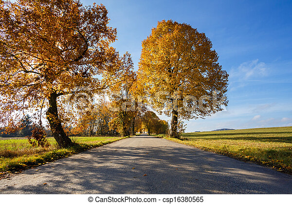 rural Road in the autumn with yellow trees - csp16380565
