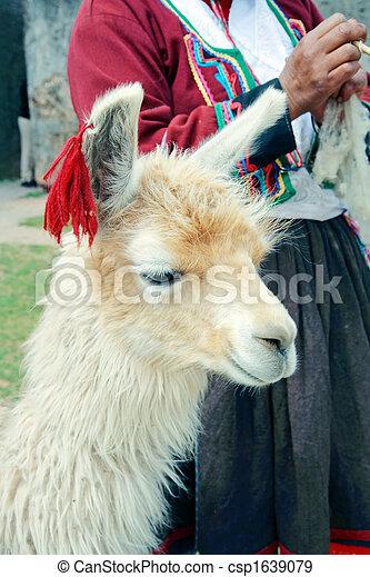 Peruvian Lama - csp1639079