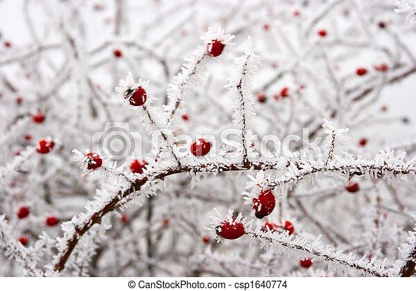 hiver - csp1640774