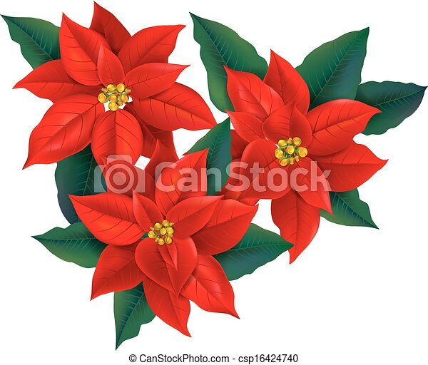 eps vector of red poinsettia christmas flower. contains, Natural flower