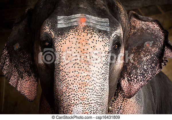 Painted Elephants Photography Elephant With Painted