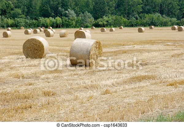 Agriculture - csp1643633