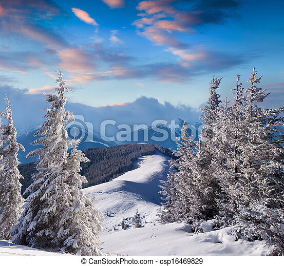 Trees covered with hoarfrost and snow in mountains - csp16469829
