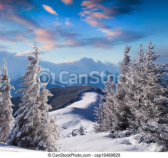 höjande,  Mountains, Snö, träd, rimfrost - csp16469829
