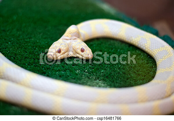 Snake with two heads