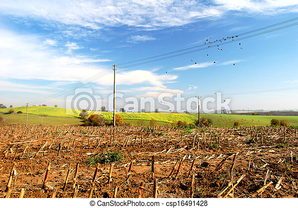 Agriculture landscape - csp16491428