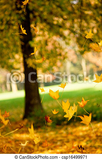 fall leaves - csp16499971