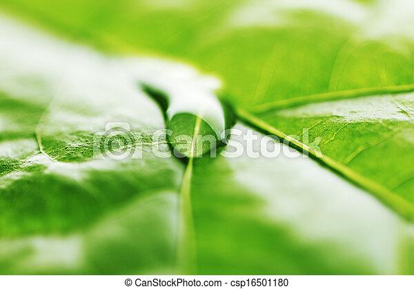 Water drop on green leaf - csp16501180