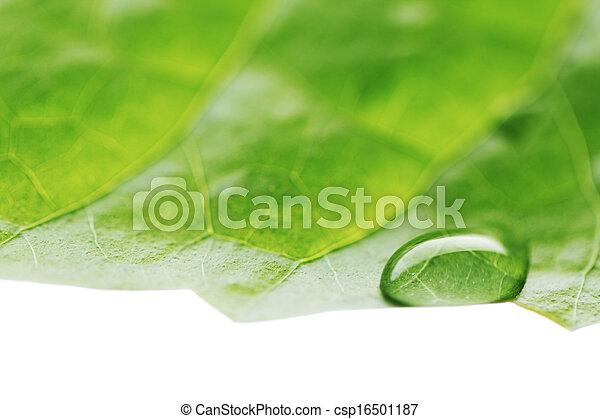 Water drop on green leaf - csp16501187