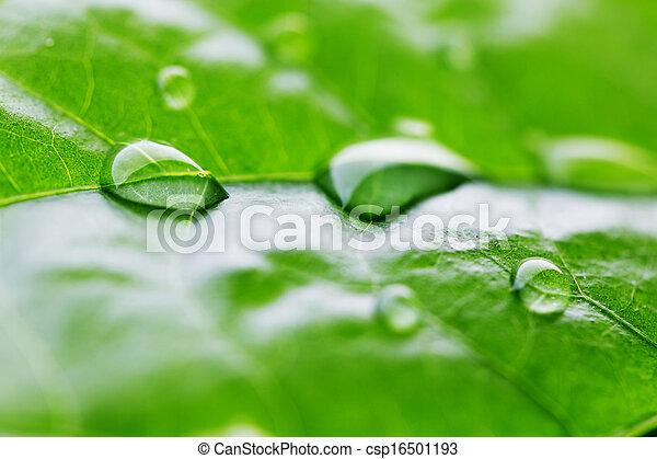 Water drop on green leaf - csp16501193