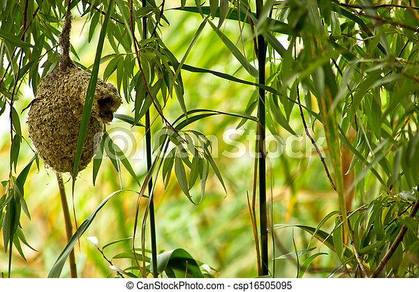 Bird's Nest Remiz pendulinus - csp16505095