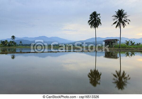 Rural scene at sunset in Borneo - csp16513326