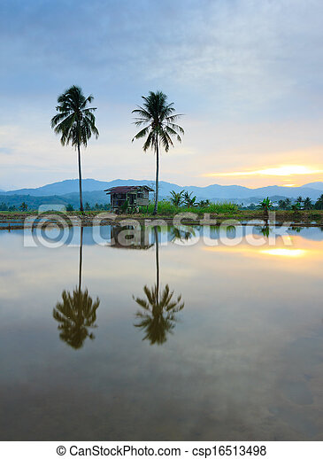 Rural scene at sunset in Borneo - csp16513498