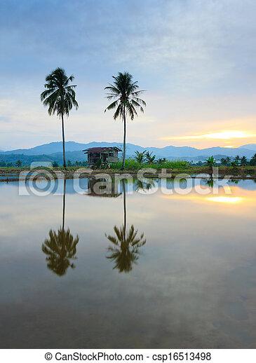 Rural scene at sunset in Borneo - csp16513498